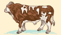 Vector drawing of a beef cow or steer
