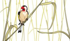 Goldfinch sitting on a reed