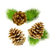 cones  with branch of fir-tree