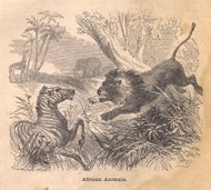 Black and White Illustration of African Animals, From 1800's