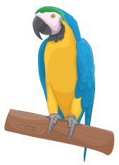 Parrot vector illustration
