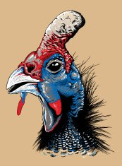 Vector sketch of a helmeted guinea fowl's head