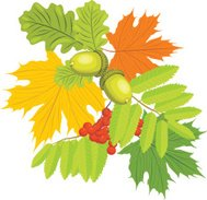 Acorns, rowan and maple leaves isolated on the white