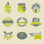 Organic retro labels, badges and other design elements with leav