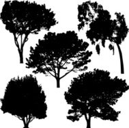 Trees silhouette, Vector