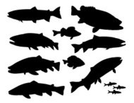 Large Sport Fish Silhouette Set