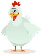 Cute Chicken Character