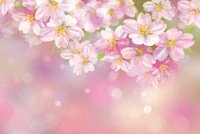 Vector of spring blossoming tree on pink background