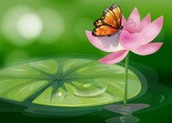 Butterfly at the top of a pink flower