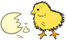 Baby Chick With Egg