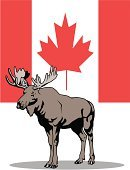 Moose and Canadian Flag