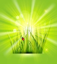 Vector spring background with green grass, sunshine and a ladybi