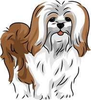 Cute Lhasa Apso dog