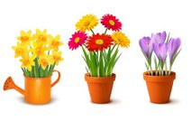 Collection of spring and summer colorful flowers