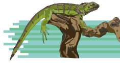 Lizard on a Branch Sketch