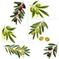 Set of olives and branches