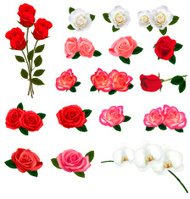 Set of roses and orchids