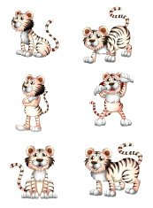 Tigers in six different positions