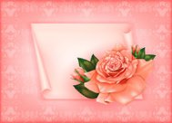 Background with beautiful pastel rose