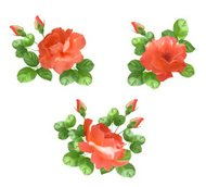 Vector flower rose collection