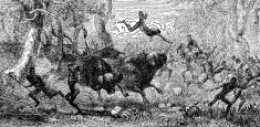 Victorian engraving of a buffalo hunt by indigenous Africans