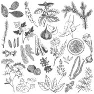 Vector set of hand drawn spices and herb