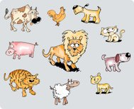 Funny animal collection