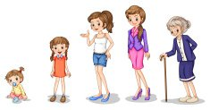 Phases of a growing female