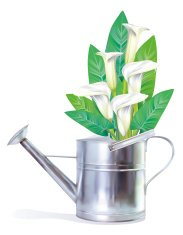 Watering Can With Calla Lilies