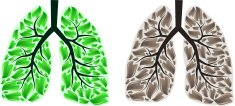 Two lungs
