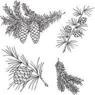 Vector silhouettes of various pine branches
