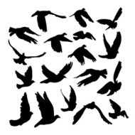 Flying Doves and pigeons set for peace concept, wedding design.