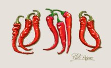 Vector hand drawing red pepper