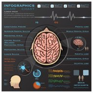 Brain And Nervous System Medical Infographic Infochart