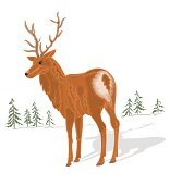 Young deer vector without gradients