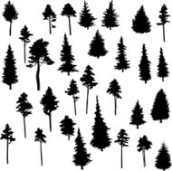 set of conifer trees