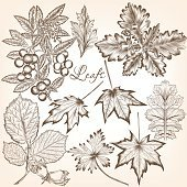 Collection of vector high detailed leafs for floral design