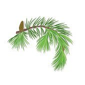 Branch of Christmas tree with pine cone