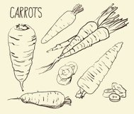 Set carrots. Vegetables. Food. Hand drawn. Silhouette, color,
