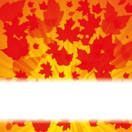 Autumn abstract background with leaf