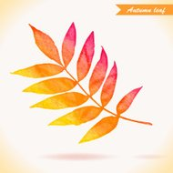 Watercolor colorful vector leaf. Vector illustration