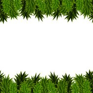 Christmas background with spruce branches