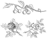Sketch of cherries on a branch and roses
