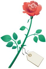 Single red rose with gift tag