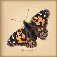 Painted Lady Butterfly - Vector