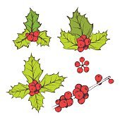 holly red berries with green leaves christmas symbol for decoration