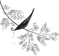Bird Sketch Pine Branch Illustration