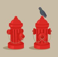 Pigeon on a fire hydrant