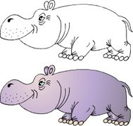 Hippopotamus  illustration