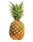 Drawing of a single pineapple